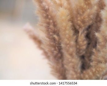 Beautiful dry brown flower for background.