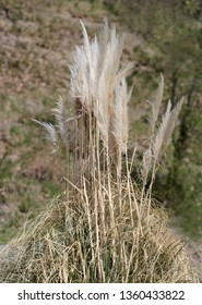 beautiful dry grass