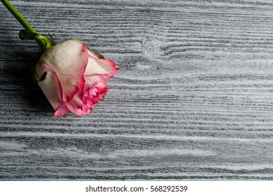 Beautiful dry pink rose against an old gray wooden background, with copy space for your text