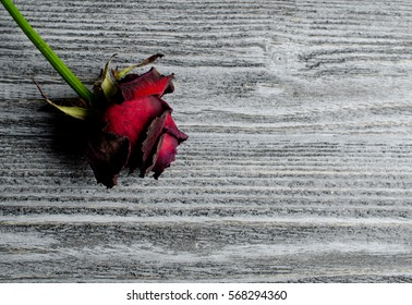 Beautiful dry red rose against an old gray wooden background, with copy space for your text