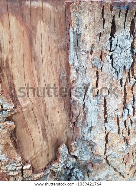 Beautiful dry tree
