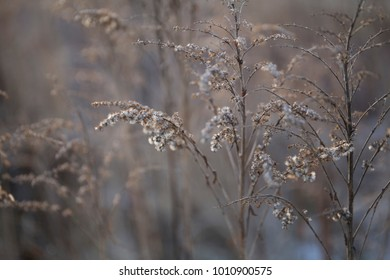 Beautiful dry withered frozen winter plants background
