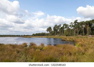 Beautiful Dutch landscape
