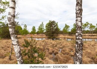 Beautiful Dutch nature