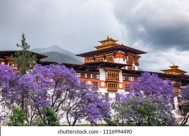 The beautiful Dzong of Punakha shining in the monsoon glory with purple trees to compliment.