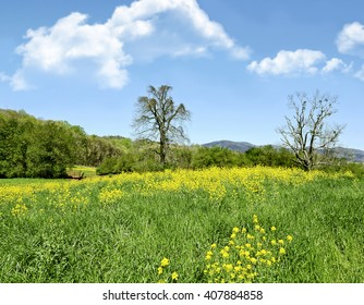Beautiful early spring day.  A rural pasture with wildflowers, and mountains in the distance.
