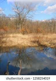 Beautiful early spring day at a small pond at Kickapoo State Park in Illinois
