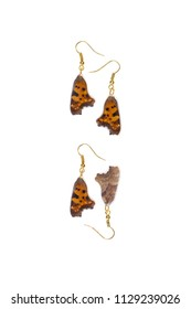 Beautiful earrings made of the forewings of a comma butterfly (Polygonia c-album)
