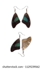 Beautiful earrings made of the wings of a shaded-blue leafwing (Prepona laertes)