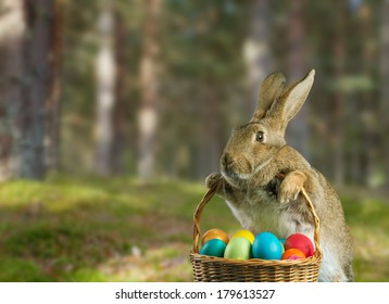 Beautiful Easter rabbit holds basket with colored eggs on nature