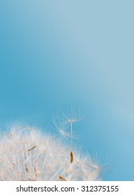 Beautiful elegant fluffy dandelion flower. Macro nature shot. Dandelion seeds against blue sky background. New life concept image. Vertical format. Closeup, shallow depth of field. copy space