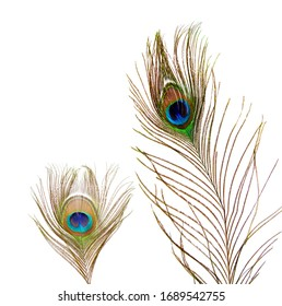 a beautiful elegant iridescent blue green golden with an eye exotic male peacock plumage bird feather isolated on white