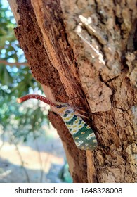 The beautiful elephant weevil on the tree in nature