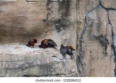 Beautiful endemic tropical bird on the stone, it has black and orange feather