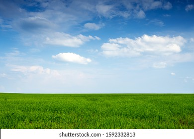 Beautiful endless field of green young sprouted grass against a blue sky with large white cirrus clouds on a sunny spring warm day, summer landscape for a desktop screensaver