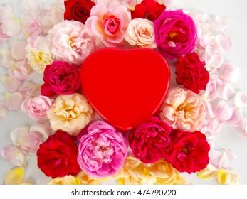 Beautiful English rose flower