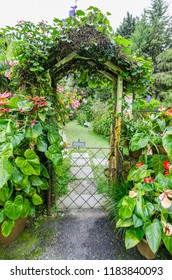 Beautiful entrance gate covered with plants and flowers to the garden.