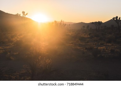 Beautiful epic sunset in amazing desert nature of Joshua Tree National Park