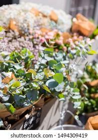 Beautiful eucalyptus branch decoration in florist shop on outdoor market. Plants for sale