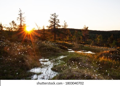 Beautiful European best slope bogs in Riisitunturi National Park, Lapland during a beautiful summer sunset, Northern Finland.