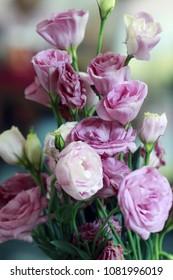 beautiful Eustoma flowers, Lisianthus, tulip gentian, eustomas. Close up.