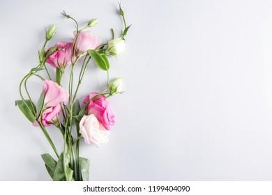 Beautiful Eustoma flowers on white background