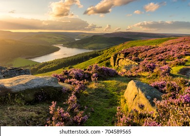 Beautiful evening light on a summer evening at Bamford Edge in the Peak District National Park.