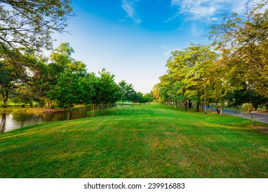 Beautiful evening light in public park with green grass field and green fresh tree plant