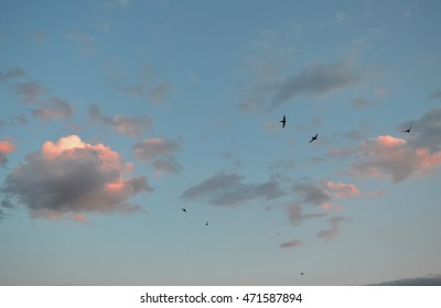 Beautiful evening sky with clouds and flying birds