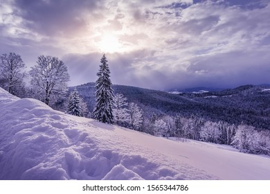 Beautiful evening view of Carpathian mountain range covered by mixed forest. Trees are under heavy snow. Sun is shining through small gap in clouds. Winter seasonal greeting card background.