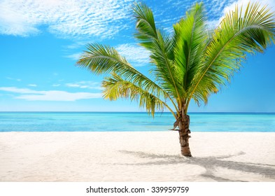 Beautiful exotic beach and coconut palm tree Saona Island, Dominican Republic