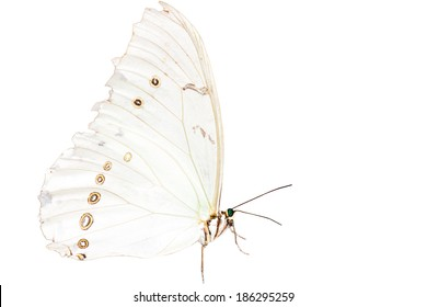 Beautiful exotic butterfly - isolated on white background