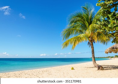 Beautiful exotic Caribbean beach of golden sand, coconut palm trees against the azure waters of Caribbean Sea , Cuba, Caribbean Islands, Central America
