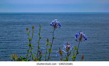 Beautiful exotic coastal vegetation on clear mediterranean sea coast background. Blanes, Costa Brava, Spain.