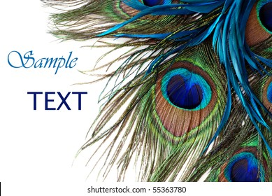 Beautiful exotic peacock feathers on white background with copy space.