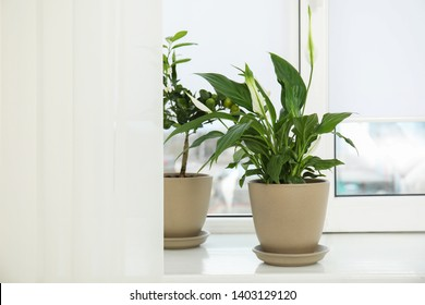 Beautiful exotic plants on window sill. Home decor
