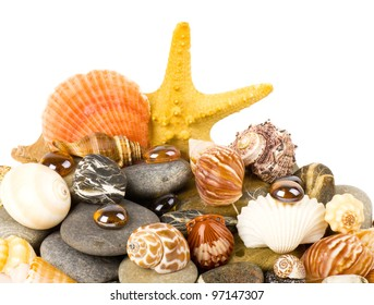 Beautiful exotic shell and stones on a white background