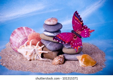 Beautiful exotic shells, stones and butterfly on a sand