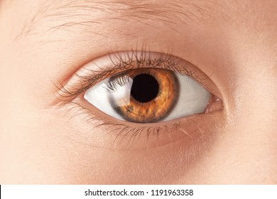 Beautiful eye macro shot, close-up
