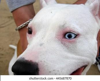 beautiful eyes in dogs