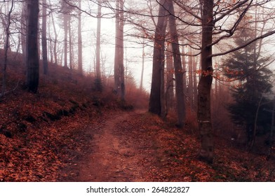 Beautiful fairy forest landscape with path and the hill. Vintage colors.