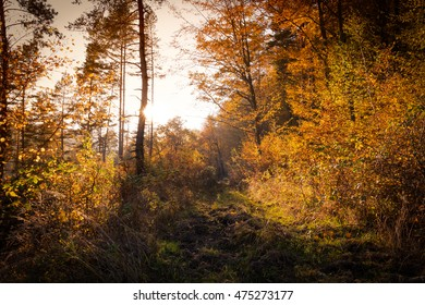Beautiful fall autumn forest landscape old road with sun shining and colorful trees and leaves
