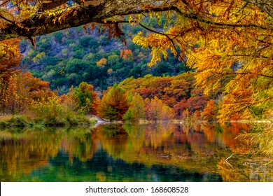 Beautiful Fall Color on Giant Cypress Trees Reflected in the Clear Waters of the Frio River at Garner State Park, Texas