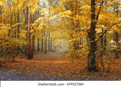 Beautiful fall colored forest and a footpath covered by golden leaves