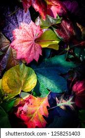 Beautiful fall colour creates a unique backdrop image.