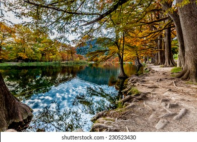 Beautiful Fall Foliage on Bald Cyprus Trees Surrounding the Crystal Clear Frio River, Texas.