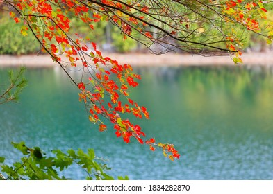 Beautiful fall foliage at Walden Pond at sun rise, Concord Massachusetts USA. Walden Pond is a lake in Concord, formed by retreating glaciers 10,000–12,000 years ago.