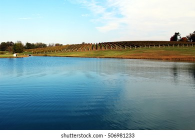 Beautiful fall landscape: a pond with blue water at a vineyard, Virginia, USA