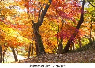 Beautiful fall scene.