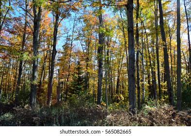 Beautiful fall season in Canada - Algonquin Park